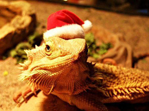 Поздравляем с наступающим Годом Дракона!