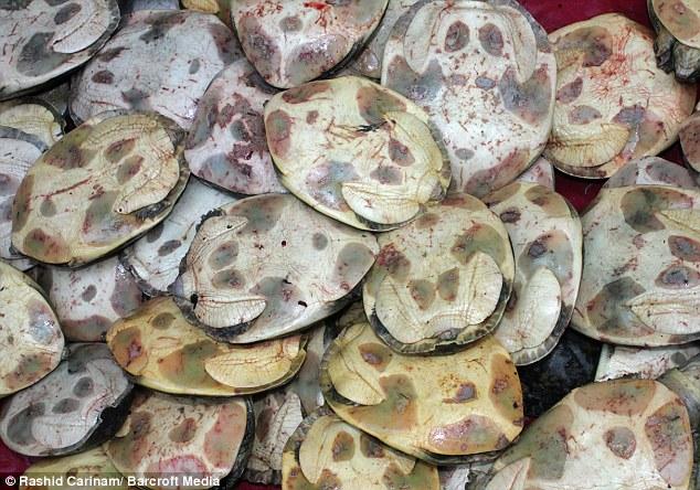 Массовое убийство черепах на индуистском фестивале
