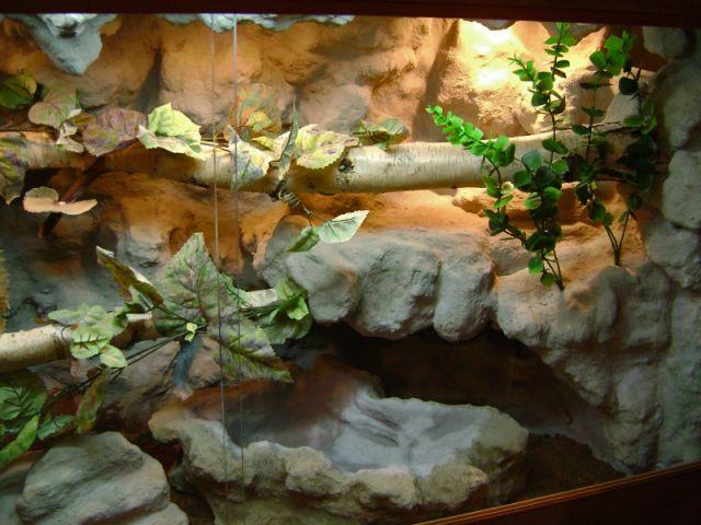 Террариум для агамы: вентиляция и влажность
