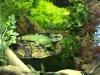 Террариум для водяной агамы