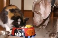 Корм для собак и кошек